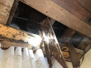 termite damage infestation in house roofing total inspections gold coast image facebook